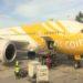 [レビュー]LCCスクート 羽田から関空~ホノルル直行便でハワイ旅行に行ってきました!